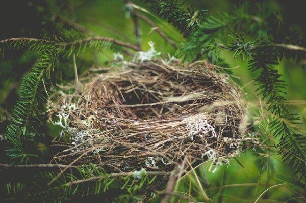 bird's nest that is empty